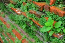 Young Plants In Old Brick Wall Stock Photos