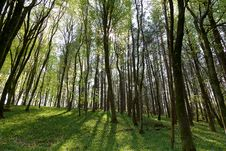 Free Forest In Spring Time Royalty Free Stock Photography - 19872457