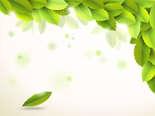 Free Abstract Background With Green Leaves Royalty Free Stock Images - 19872549