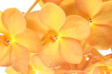 Free Orchid Flower Stock Photos - 19873233