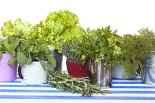 Free Herbs Collection Stock Photography - 19873242