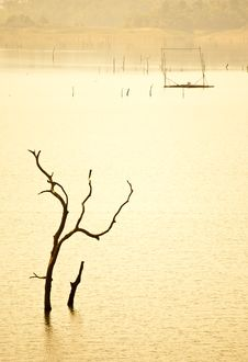 Free Stick In The Reservoir Royalty Free Stock Photo - 19873555