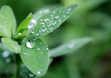 Free Green Leaves Royalty Free Stock Images - 19873709