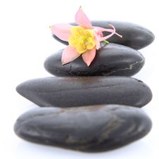 Free Flower On A Spa Stone Stock Photography - 19874952