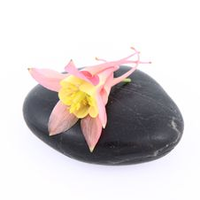 Free Flower On A Spa Stone Stock Photography - 19874992