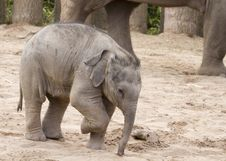 Free Elephant Royalty Free Stock Photo - 19875255