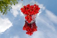 Free Red Currant Stock Image - 19877061