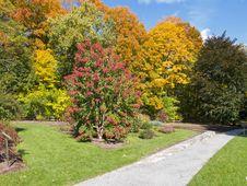 Free Public Garden In Fall Stock Photo - 19877260