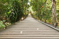 Rope Walkway Through The Treetops Stock Image