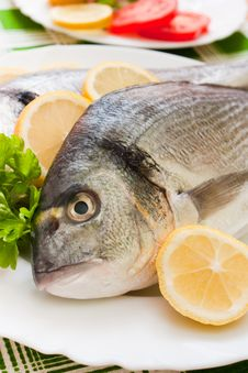 Gilt-head Bream Stock Photos