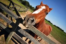 Free A Domestic Horse Stock Photo - 19879280