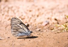 Free Large White Butterfly Stock Photos - 19879673
