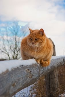 Free Red Cat Royalty Free Stock Photos - 19880068