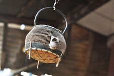 Francolin Bird Birdcage Hang Thailand Wood Stock Image