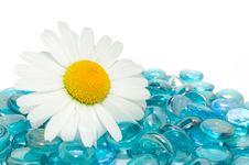 Free Daisy On Blue Glass Stones Royalty Free Stock Photo - 19881585