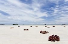 Free Beach With Coral Royalty Free Stock Images - 19882909