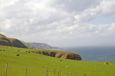 Free Farmland On The Scottish Coast Royalty Free Stock Photography - 19883137