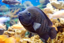 Free Aquarium Fish Stock Images - 19883274