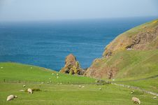 Free Sheep By The Coast Royalty Free Stock Image - 19883496