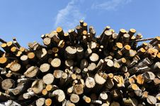 Free Wood Royalty Free Stock Photos - 19883908