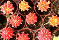 Beautiful Cactus Royalty Free Stock Images