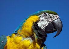Free Bird Parrot Royalty Free Stock Photography - 19883927