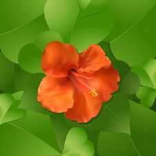 Free Hibiscus Flower And Leaves Royalty Free Stock Photo - 19884335