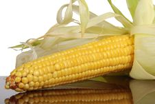 Free Corn Stock Photography - 19884832