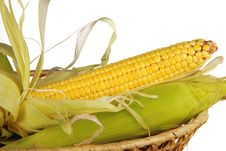 Free Corn Stock Photography - 19884842
