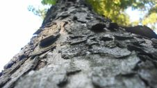 Free Tree Crust Royalty Free Stock Photos - 19886288