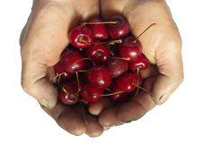 Free Handful Cherries In Rough Men Hands Stock Photos - 19889173