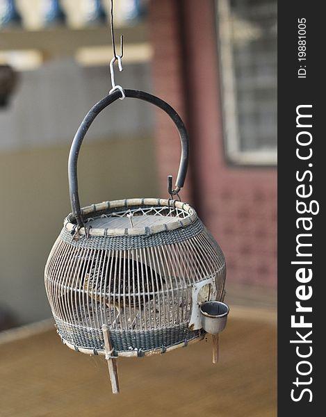 Bird Francolin Wood Birdcage Thailand Hang