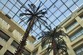 Free Hotel Lobby Coconut Tree Stock Images - 19892314