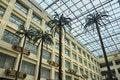 Free China Hotel Lobby Coconut Tree Stock Photography - 19892452