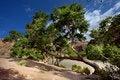 Free Trees Stock Photo - 19894630