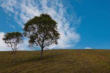 Green Tree Againt Blue Sky Royalty Free Stock Photos