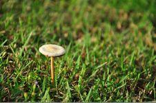 Free Mushroom On Green Grass Stock Photos - 19891743