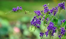 Free Violet Flower On Green Royalty Free Stock Image - 19891846