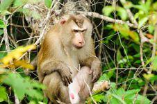 Monkey At Khao Yai National Park Stock Photography
