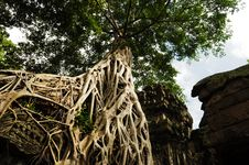 Free Tree Root Sit On A Ruin Ancient Building Stock Images - 19892624