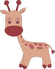 Free Giraffe Royalty Free Stock Photos - 19893098
