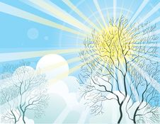 Free Sun Rays And Tree Royalty Free Stock Photography - 19897907