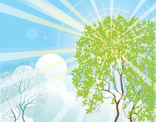 Free Sun Rays And Tree Royalty Free Stock Image - 19897936