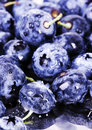 Free Fresh Blueberries Royalty Free Stock Photography - 1990907