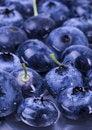 Free Fresh Blueberries Stock Photo - 1991080