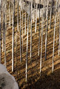 Free Trees Stock Photos - 1997213