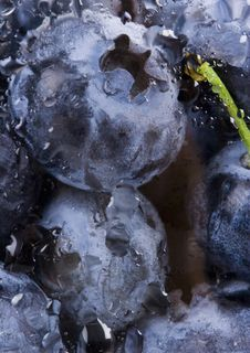 Free Fresh Blueberries Stock Photos - 1990833