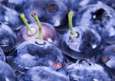 Free Blueberries Royalty Free Stock Image - 1991136
