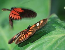 Free Butterfly Stock Photo - 1993060
