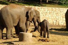 Free Elephant Baby With Mother Royalty Free Stock Photos - 1995808